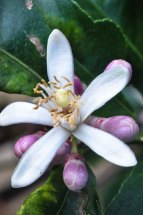 Spring Flowers AbbyVille Web-4