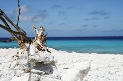 abc-islands - Niederländische Antillen - Karibik