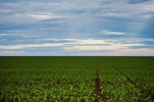 Brasnorte, MT, Brasil: Área de plantação de soja próxima ao município de Brasnorte, noroeste do Mato Grosso. (Foto: Marcelo Camargo/Agência Brasil)
