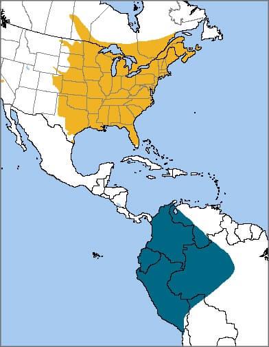 Baltimore Oriole Migration Map 2019 : baltimore, oriole, migration, Baltimore, Oriole, Migration, Catalog, Online