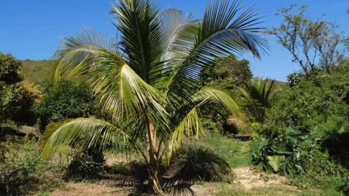 palmera--zihuatanejo.jpg