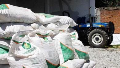 Photo of Anuncia LRR que el fertilizante se entregará éste fin de semana
