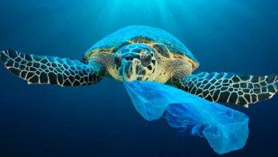 Photo of Ambientalista señala riesgo de contaminación en el mar por uso de guantes y cubrebocas