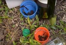 Photo of Vital que población elimine de sus casas criaderos de mosquito transmisor del dengue