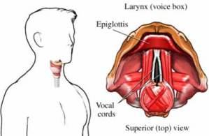 11 Impressive Home Remedies for Laryngitis