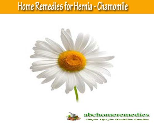 Chamomile: Home Remedies for Hernia
