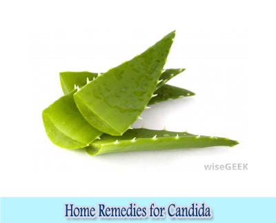 Aloe Vera : Home Remedies for Candida