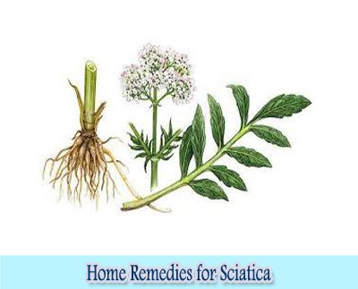 Valerian : Home Remedies for Sciatica