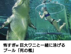 ニュース | ワニと泳げる | 高品質で安いネイルサロンABCネイル 銀座店