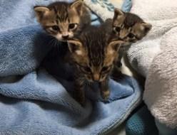 動物|子猫 | 高品質で安いネイルサロンABCネイル 銀座店