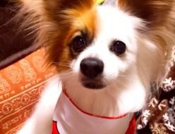 ペット | 愛犬 | 高品質で安いネイルサロンABCネイル 池袋店