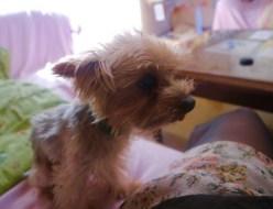 ペット |愛犬 | 高品質で安いネイルサロンABCネイル 池袋店