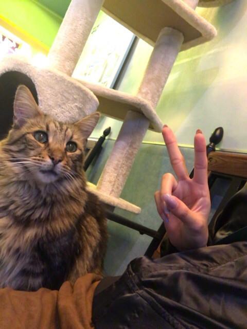 おでかけ   猫カフェ   高品質で安いネイルサロンABCネイル 池袋店