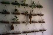 Project : Hanging Garden in my lab