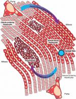 Chapter 25 – α1-Antitrypsin Deficiency