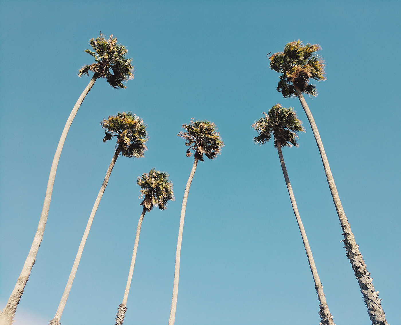 Wallpaper of the Week - California Palm Trees