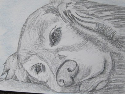 labrador pencil sketches (6)