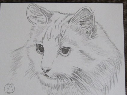 pencil sketch white cat (6)