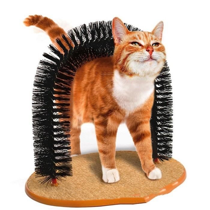 Cat Scratching Arch,