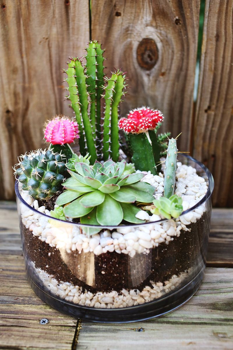 Planting A Simple Cacti Garden – A Beautiful Mess