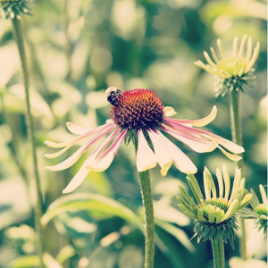GreenEnvy echinacea Farmacy Beauty