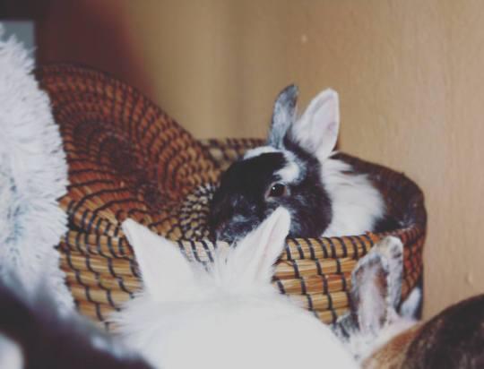 Jola schläf im Wäschekorb
