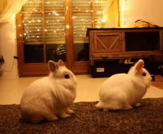 Malheur und Coco