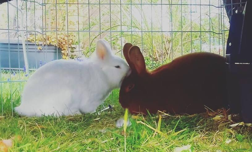 Coco und Mogli