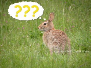 130518_Bunny1_MC