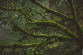 gorgegreens