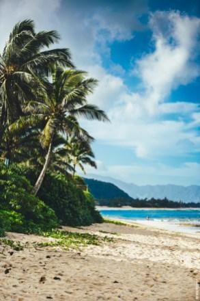 hawaiipalms