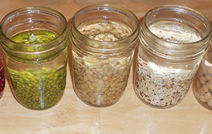 Temperatura apei trebuie să fie de 40-45 de grade. După aceea, semințele și uscate în timpul zilei sunt ținute în soluție.