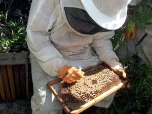 apicultura (102)