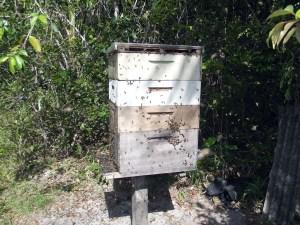 apicultura (105)