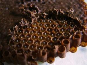 Produção de colônias 9 -abelhas sem ferrão  - Cristiano Menezes