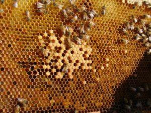 abelha-cera-1024