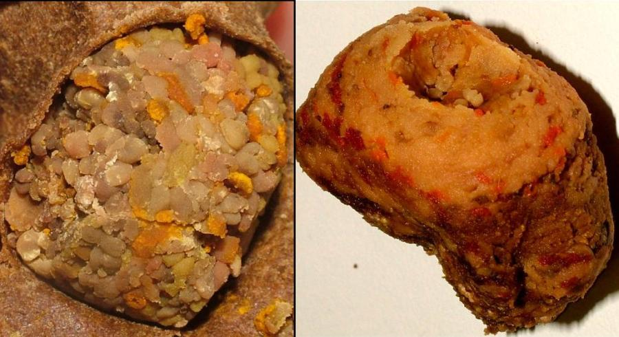 pólen Mandaguari (Scaptotrigona depilis)