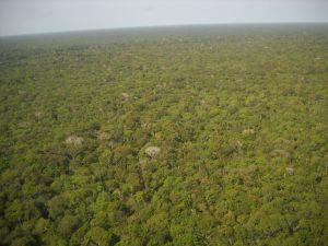 floresta amazonica compressed