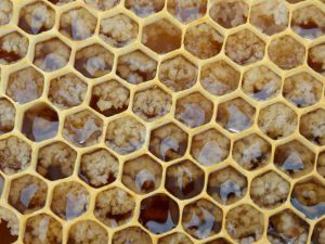 honeycomb compressed