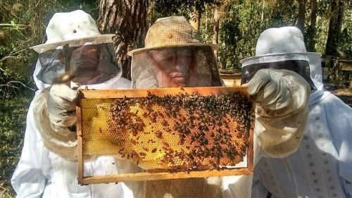 epagri-apicultura