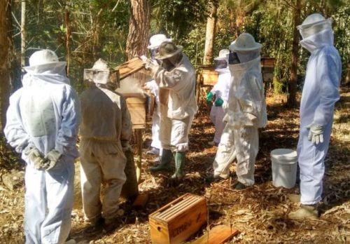 epagri-apicultura2