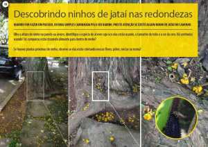 biodiversidade em centros urbanos: descobrindo ninhos de jataí nas redondezas
