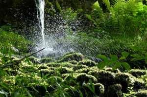 planta-agua