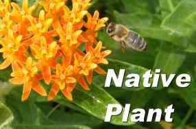 PTA Native Plant Sale! Thursday, May 10
