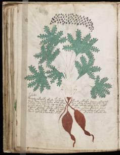manuscrito080