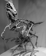 250px-Troodon_Perot_Museum