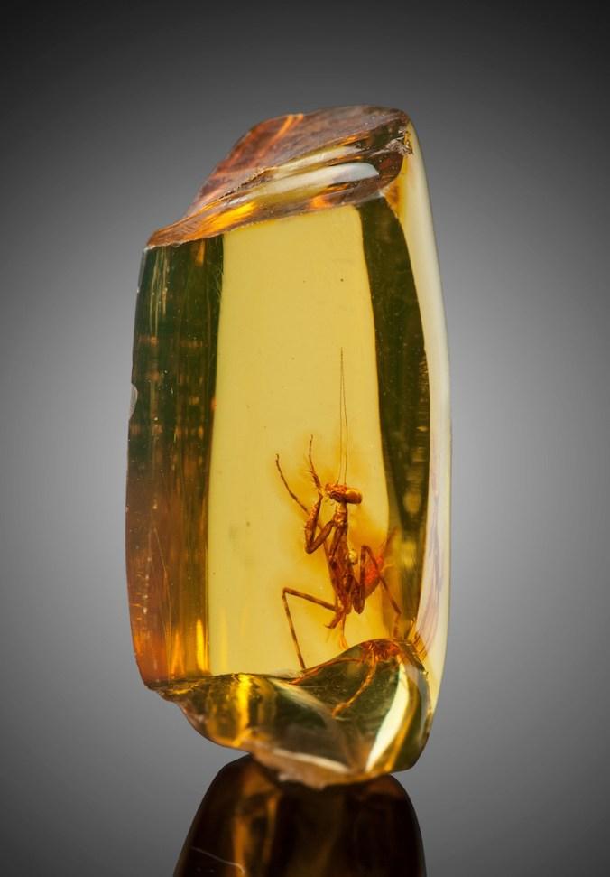 praying-mantis-amber-heritage-auctions-4