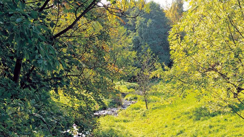 Berliner Osten: Wuhletal wird jetzt zum Ökokonto