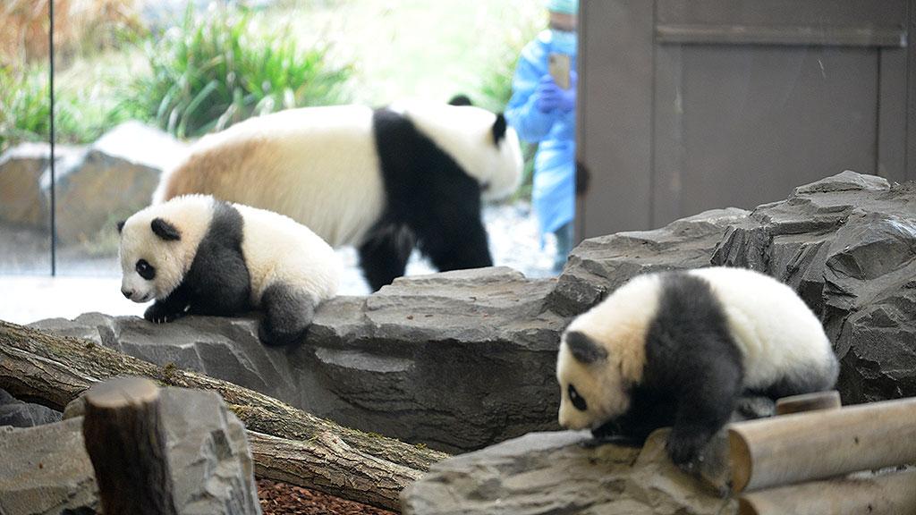 Zoo Berlin: Kleine Bären ganz groß