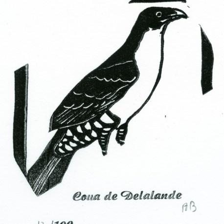 Coua de Delalande